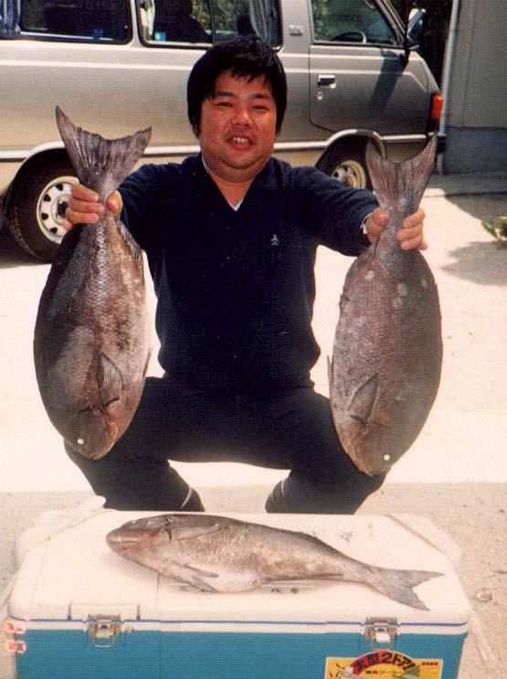 湯瀬で釣った尾長グレ。60センチ超4キロ級